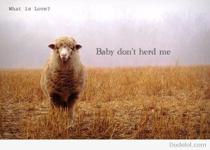Baby don't herd me GIF from DudeLOL.com